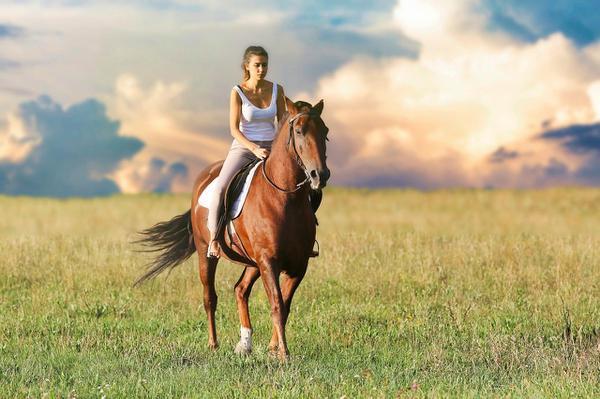 Polecane preparaty dla konia sportowego
