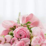 Ładne kwiaty z Białegostoku