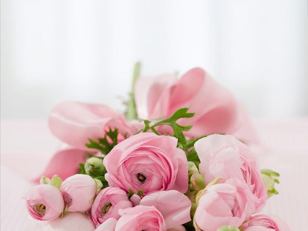 kwiaty ogrodowe białystok